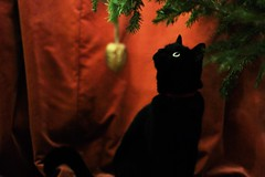 (kaila.skeetbrowning) Tags: christmas red green cat blackcat holidays christmastree ornament curiosity