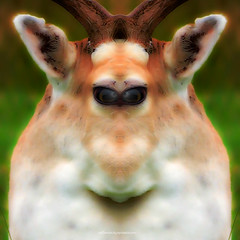h a p p y . n e w . d e e r . 2 0 1 6 (epiclectic) Tags: reflection animal photoshop mirror design graphic wildlife humor perspective manipulation images symmetry reflect symmetrical 423 mutant twisted enhancement explored epiclecticcom epiflection epiflectionbyepiclecticcom