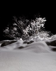 """Powdered sugar"" Black and White winter night in the heart of Reykjavik.  Prints and Digital Download  are available on my website:  www.arnarkristjansphotography.com (ArnarKristjans_photography) Tags: trip trees winter blackandwhite white snow cold tree art tourism nature beautiful beauty night garden dark landscape photography landscapes frozen iceland amazing travels europe photographer tour nightscape photoshoot natural artistic magic fineart creative picture photographers tourist tourists magical splendid fantasticnature"