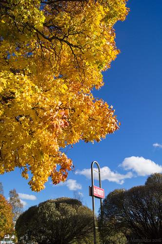 Yellow & blue autumn