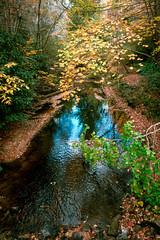 Greenland Creek (agasfer) Tags: 2016 northcarolina hiking appalachia autumn foliage colors pentax k3 topaz restyle sigma1020 panthertownvalley