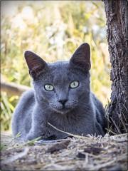 UNA DE GATOS 03 (BLAMANTI) Tags: gatos mascotas felinos