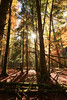 Indarraren Irati III (Gure Elia) Tags: nafarroa vertical trees granangular bosque forest woods otoño landscape autumn contraluz backlight selvadeirati canoneos5dmarkii canon1740l