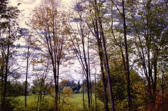 A Walk (robinlamb1) Tags: landscape trees pasture greengrass colouredleaves whiteclouds bluesky aldergrove bc outdoor scenic peaceful