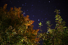 You Were Nothing Special 'til You Turned Out the Light (8) (Mrs.Black&White) Tags: night stars nightgarden garden dark leaves trees cosmic canon5d