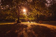 Autumn (primulmeusarut) Tags: uk england london st jamess park shades warmth yellow trees leaves people sun sunshine sunday