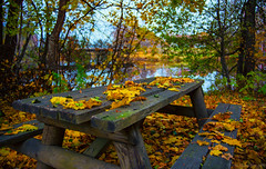 Yellow october (Joni Mansikka) Tags: autumn nature yellow leaves trees table outdoor forest noormarkku suomi finland canonef2870mmf3545ii