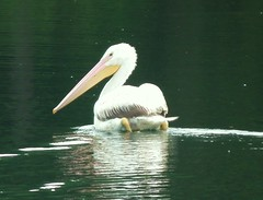 Fuji Fine Pix HS10 859 (bobduke2) Tags: fujifinepixhs10 pelicanonpooterspond
