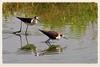 活在當下   Birds live (C. Alice) Tags: water nature hongkong 2016 canonef300mmf4lisusm canoneos7d eos7d canon 300mm wetland spring reflection bird favorites50 500v20f autofocus aatvl01 1000views aatvl02 favorites100