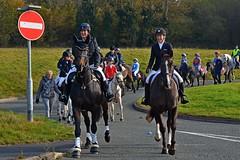 were off again (napoleon666uk) Tags: liverpool international horse festival liverpoolinternationalhorsefestival horseshow echoarena animal parade