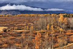 Fall Willow Flats (David C. McCormack) Tags: americana eos eos6d environment western west tetons grandtetonnationalpark inspiration jacksonhole landscape mountains moranjunction nature nationalparks nationalregisterofhistoricplaces outdoor rockymountains rural wyoming