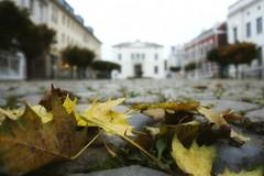 Herbst in der Stadt (simson60) Tags: herbst autumn stadt tiefenschrfe