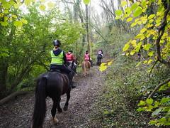 Devil's Dyke bridleway (debs-eye) Tags: devilsdyke southdowns horses horse