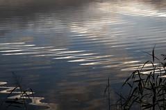 Sonnenaufgang an der alten Treeneschleife in Sderhft; Nordfriesland (1) (Chironius) Tags: sderhft nordfriesland schleswigholstein deutschland germany allemagne alemania germania  szlezwigholsztyn niemcy treene fluss river rivire rio  fiume stream morgendmmerung sonnenaufgang morgengrauen  morgen morning dawn sunrise matin aube mattina alba ochtend dageraad zonsopgang   amanecer morgens dmmerung spiegelung refleksion reflection rflexion riflessione  reflexin yansma