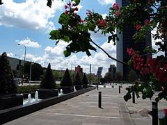 Cuatro Torres business área / Four Towers business area (Rafa Gallegos) Tags: madrid españa spain cuatrotorresbusinessarea fourtowersbusinessarea rascacielos skyscraper edificio building