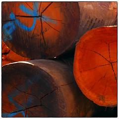 Logging On (cupitt1) Tags: log logging timber wood sawmill getters cutting hardwood millfield