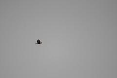 ART_9042m (MILESI FEDERICO) Tags: milesi milesifederico italia italy iamnikon nikon nital nikond7100 piemonte piedmont visitpiedmont valsusa valdisusa valliolimpiche valledisusa autunno automne fall d7100 alpi alpicozie 2016