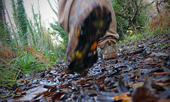 Stepping Out (Andrew Gustar) Tags: 116picturesin2016 walk hike trek boots leaves path track fall step autumn trees