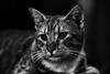Botas (Jaime Recabal) Tags: canon 40d gato blancoynegro blackandwhite cat recabal monochrome felino sigma