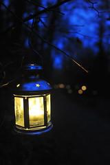 La-magia-del-bosco-di-notte-2016-35