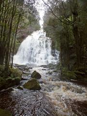 Nelson Falls (LeelooDallas) Tags: australia tasmania nelson falls landscape dana iwachow fuji finepix hs20 exr water waterfall tree forest