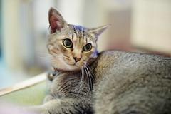 Bill the girl (Steve only) Tags: sony nex3 porst color reflex auto 11455mm 55mm f14 5514 m42  mitakon lensturbo cats bill