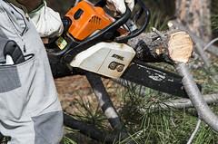 Desramando (Edu JG) Tags: motosierra poda ramas rama chainsaw tree trabajo working stihl
