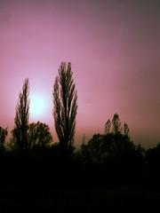 color (Darek Drapala) Tags: color morning sun sunset sunrise sunshine sunbeams panasonic poland panasonicg5 forest legnica nature trees tree red mood