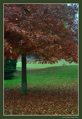Falling leaves (cienne45) Tags: carlonatale cienne45 natale autunno autumn foglie leaves albero tree bose fallingleaves nature pace peace