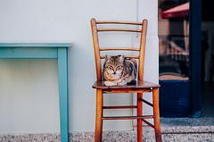 (Berill Sándor Photography) Tags: summer cat photo croatia analogue krk 2015 analóg