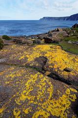 20150906-42-Yellow lichen (Roger T Wong) Tags: rocks australia tasmania lichen foreshore 2015 tasmanpeninsula maignonbay sony1635 rogertwong sel1635z sonya7ii sonyilce7m2 sonyalpha7ii sonyfe1635mmf4zaosscarlzeissvariotessart