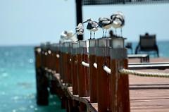 Mexico Playa Riviera (davidheath01) Tags: mexico water rivieramaya nikon nikond5100 sea wildlife holiday vacation birds rope depthoffield dof seascape landscape photograph photography beauty beautiful beach americas