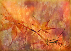 Burnished Harbringer (virtually_supine popping in and out) Tags: photomanipulation creative vividcolour autumnleaves autumncolours textures layers virginiacreeper digitalartwork photoshopelements9 tmiseptembercontest~autumnleaves