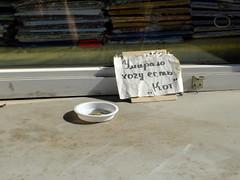 """I'm starving to death. Yours, Cat"" (GrusiaKot) Tags: money cat feeding ukraine kharkov gatto kharkiv mendicante  ucraina   saltovka"