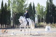 Amazona (Alfonso Carrion Fotografia) Tags: horses caballos concurso albacete elegance elegante acfotografia