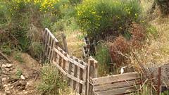 impromptu fencing IMG_8084 (mygreecetravelblog) Tags: field fence countryside greece greekislands andros cyclades cycladesislands androsgreece androsisland korthi korthiou ormoskorthiou ormoskorthiouandros korthivillageandros korthiouandros