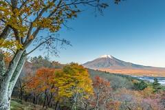 Fuji autumnal scenery (shinichiro*@OSAKA) Tags: november autumn japan fuji momiji jp   crazyshin yamanashi 2015  colorleaves   abigfave    afsnikkor2470mmf28ged nikond4s 20151103ds19452 22429247579 201512gettyuploadesp