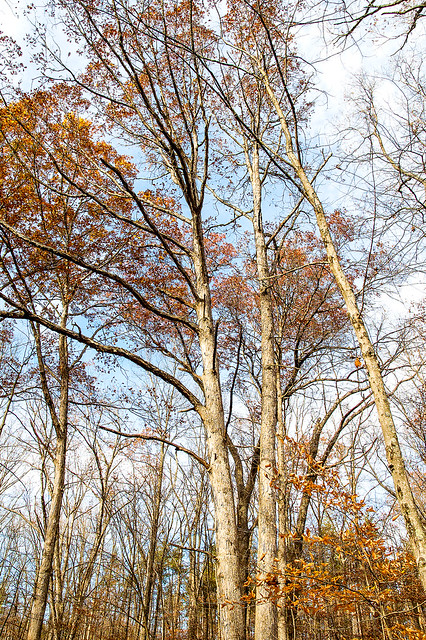 Hoosier National Forest - Hickory Ridge - November 7, 2015