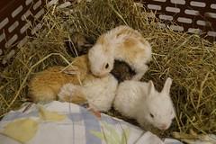 Trušu mazuļi-bāreņi