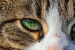 IMG_5876 (d_fust) Tags: cat kitten gato katze  macska gatto fust kedi  anak katt gatito kissa ktzchen gattino kucing   katje     yavrusu