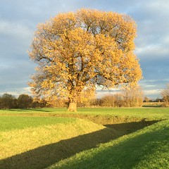 Beautiful winter colours (dark_dave25) Tags: new november cold sunny national trust sloes 2015 lyveden bield