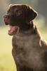 taylor_tal-2 (Florian Jakob Rothlehner) Tags: hund hasutier drausen blitz strobist 6d canon bokeh lastolite firefly yongnuo