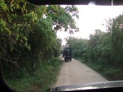 Yala National Park - Tusker elephant blocking the safari path