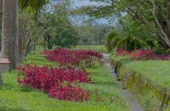 Painting (JooPedro64 (50%)) Tags: flower tree water agua nikon stream flor jardimbotnico arvore botanicgarden dx corrego d7200 18140mm