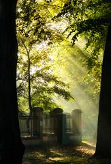 Djurgården, Stockholm, October 15, 2015 (Ulf Bodin) Tags: autumn sun mist tree fog fence se sweden stockholm outdoor streetphotography sverige rays höst sunray djurgården dimma stockholmslän lusthusporten canoneosm3 canonefm55200mmf4563isstm