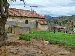 Casas típicas de Floresta Boyacá Colombia (@omarsilva_photos) Tags: houses sky naturaleza verde green chicken nature arquitectura américa colombia ngc huhn latinoamerica campo nationalgeographic airelibre gallinas suramérica armonia omarsilvaphotos florestaboycolombia casasdeantaño typisschehäuser