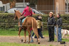 DSC02821_s (AndiP66) Tags: gymkhana npz bern geschicklichkeits reiten geschicklichkeitsturnier reiterspiele reitsport samstag saturday 2015 oktober october pferd horse schweiz switzerland kantonbern cantonofbern concours contest wettbewerb equestrian sports pferdesport sport nationalespferdezentrumbern nationales pferdezentrum springen horsejumping springreiten pferdespringen sony sonyalpha 77markii 77ii 77m2 a77ii alpha ilca77m2 slta77ii sony70400mm f456 sony70400mmf456gssmii sal70400g2 andreaspeters ch