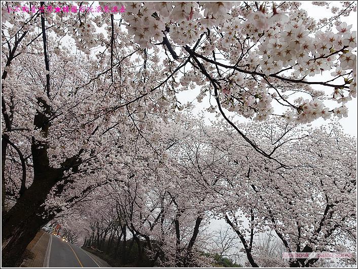 河東花開十里路 (34).JPG