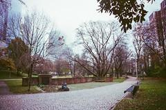 Taunusanlage (hiphopmilk) Tags: park trees film analog 35mm germany nikon europe kodak frankfurt analogue nikonfm2 fm2 deutsche taunusanlage nikonfm2n 135film jaredyeh hiphopmilk