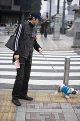 Man with doggie- Harajuku Tokyo (Jon Bower) Tags: road dog man japan tokyo crossing tiny harajuku leading peeing urinating